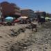 La Asociación Vecinal El Morche exige medidas medidas de protección para las playas