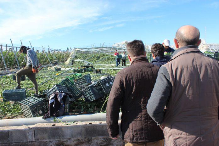 El consejero de Agricultura insta al trabajo conjunto de las Administraciones para tener cuanto antes una evaluación exacta de los daños producidos.