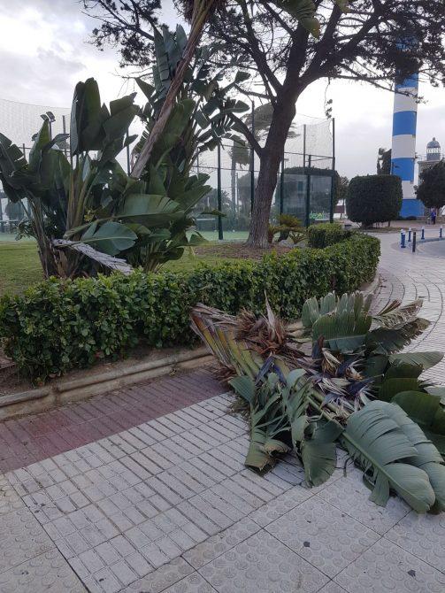 Caída de ramas por las fuertes rachas de viento.