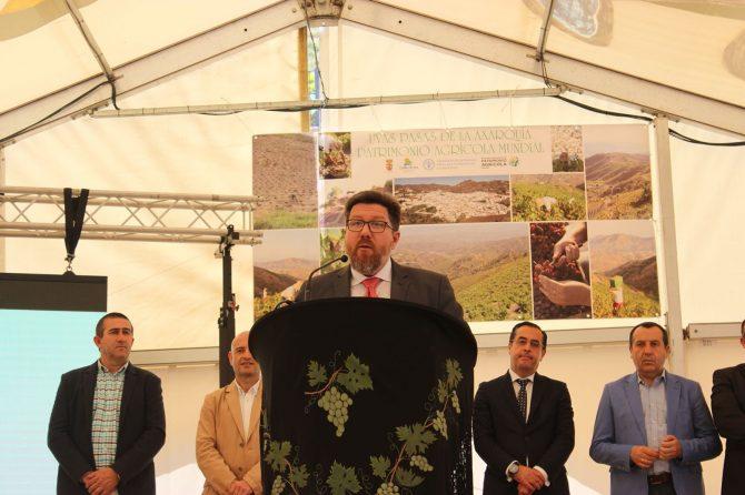 La Junta avala la creación de una fundación para la gestión del patrimonio agrícola mundial de la uva pasa moscatel