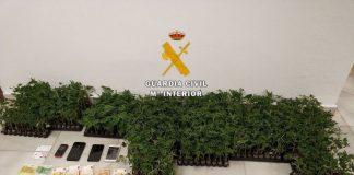• Ha sido detenido el conductor del vehículo que portaba oculto en su interior 6 cajas con las plantas de marihuana.