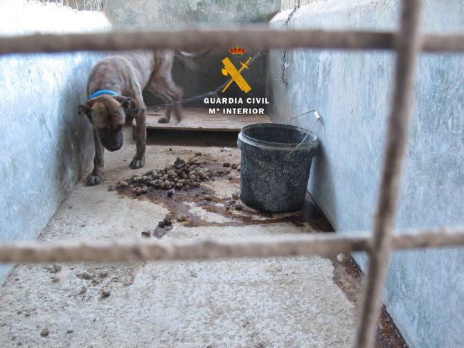 La Guardia Civil realiza cuatro intervenciones contra el maltrato animal en la Axarquía
