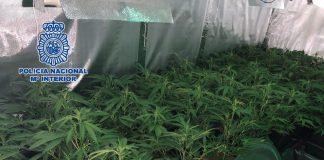 Se han incautado, entre otros efectos, 577 gramos de cocaína, 80 de éxtasis, 39 de heroína, 111 de hachís, 22 de marihuana, 28 plantas de marihuana, 11.443 euros en efectivo, nueve teléfonos móviles y dos balanzas de precisión