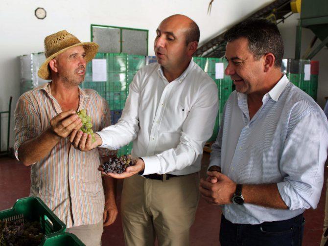 El PSOE reivindica a la Diputación que destine inversiones por al menos 13 millones a los municipios de la Axarquía vinculados a la uva pasa