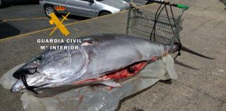 El atún fue pescado ilegalmente, careciendo de cualquier tipo de documentación y etiquetado que acreditara su legal procedencia.