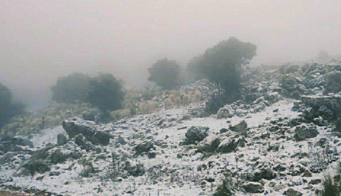 Nieve en la subida a Vilo, en Alfarnate.