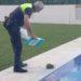 La Policía Local de Vélez-Málaga recoge un erizo europeo en una piscina de Torre del Mar